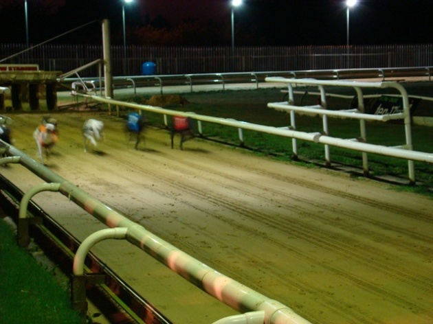 And They're OFF!  Harlow Greyhound Racetrack
